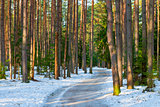 snowy road in a mixed forest in winter