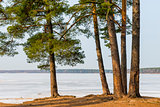 Spring landscape of lake and pine growing on the shore