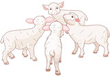 Sheep Group