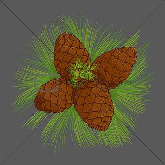 cedar cones with pine needles