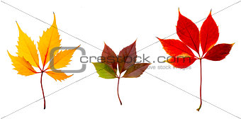 Autumn Colors Leaves