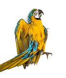 Blue-and-yellow Macaw lying on his back isolated on white