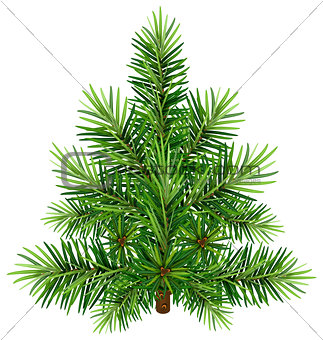 Green Christmas pine tree