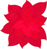 Illustration of Christmas Poinsettia Flower Isolated on White