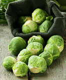 Fresh organic cabbage. Brussels sprouts. Healthy eating