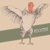 front rooster sketch