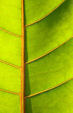 Beautiful green leaf