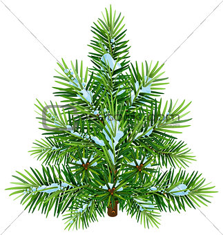 Green fluffy Christmas pine tree in snow