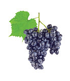 Cluster fresh juicy organic grapes with green