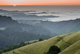 Foggy Forest and Ocean Sunset of Santa Cruz Mountains