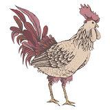 Profile of cock sketch