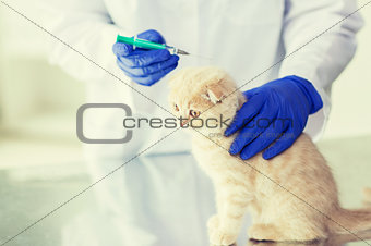 close up of vet making vaccine to kitten at clinic