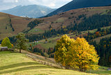 autumn trees in mountains Carpathians
