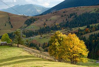 autumn trees in mountains Carpathians