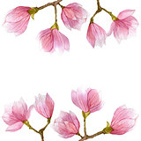 flower blossom spring illustration with magnolia branches in watercolor. season design.