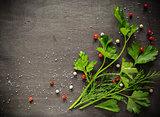 Fragrant fresh parsley and dill arranged on a diagonal  dark background.
