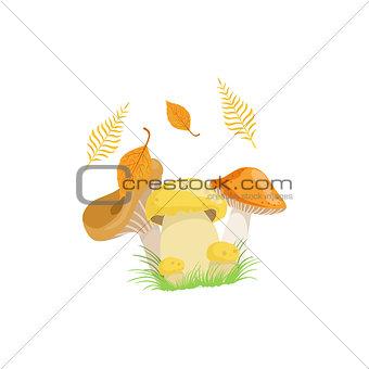 Three Mushrooms As Autumn Attribute