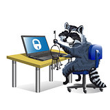 Raccoon hacker sitting at laptop