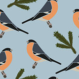 Seamless pattern bullfinch blue