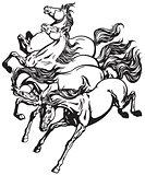 wild horses black white