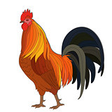 Arrogant Red Rooster