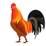 Proud Red Rooster