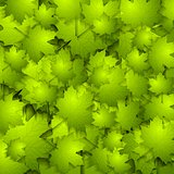 Green summer leaves vector texture