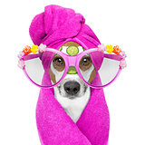 dog with a beauty mask wellness spa