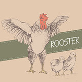 front rooster and chick