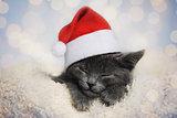 cute santa kitten