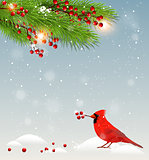 Green fir branches and cardinal bird