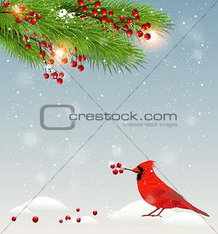 Green fir branches and cardinal bird