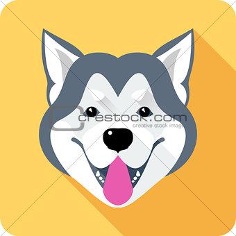 Alaskan Malamute dog icon flat design
