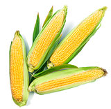 Fresh corn harvest vegetables top view green