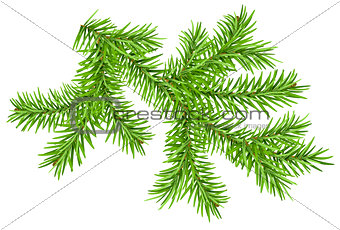 Green pine branch isolated on white