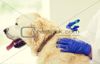 close up of vet making vaccine to dog at clinic