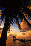 Belize Caye Caulker, Coconut Sunset