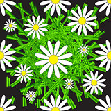 Chamomile and Grass Seamless Pattern