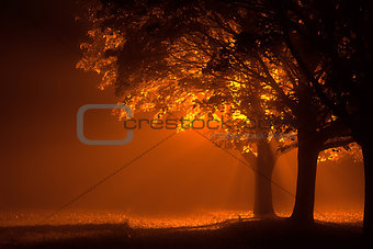 Beautiful trees at night with orange light