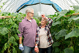 happy senior couple at farm greenhouse