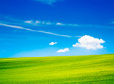 Landscape with Green Field and Blue Sky in Summer