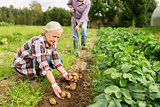 senior couple planting potatoes at garden or farm