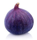 One Fig fruit on white