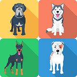 Set 9 dog icon flat design