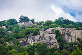 Rocks and green trees