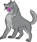 Timber Wolf Holding Plumeria Flower Drawing