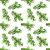 Seamless pattern of fir tree branches on white