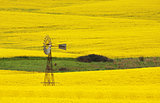 Windmill in a field of Canola