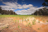 Flooded crops in Central West NSW