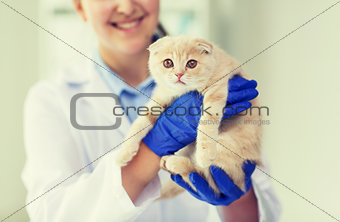 close up of vet with scottish kitten at clinic